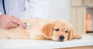 Radioterapia nel cane