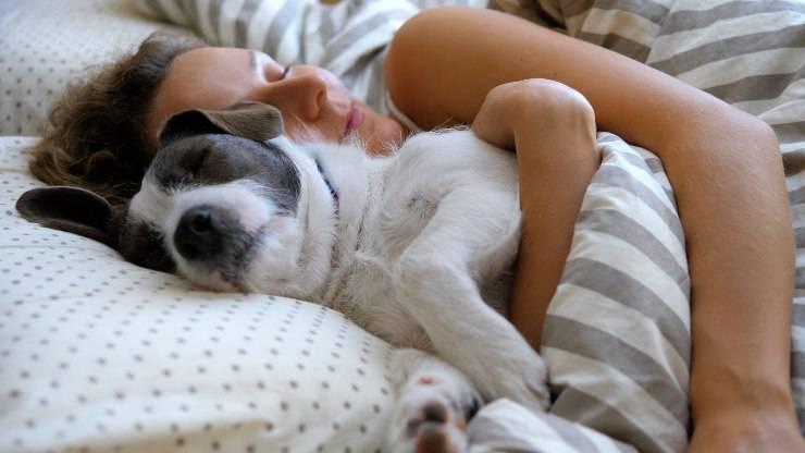 cane dorme nel letto