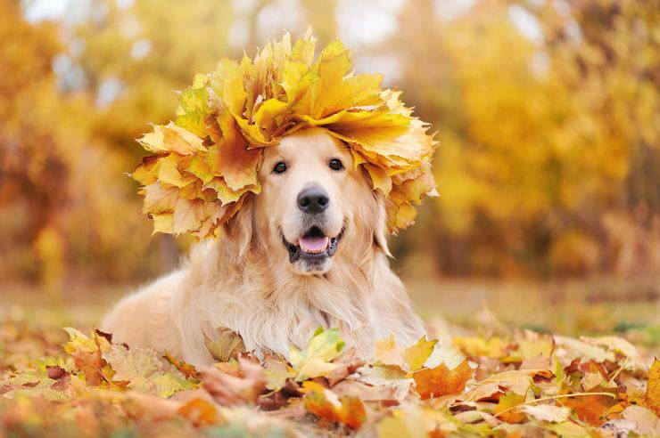 cane adora giocare con le foglie
