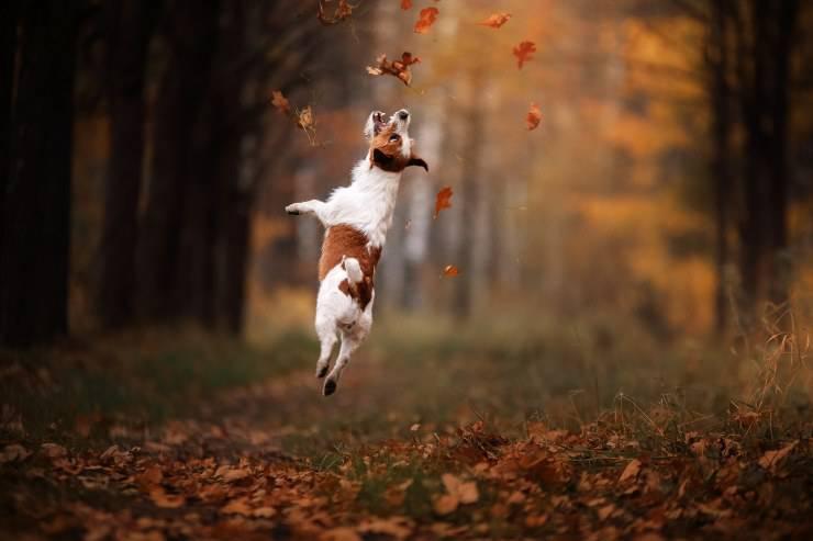 cane e foglie