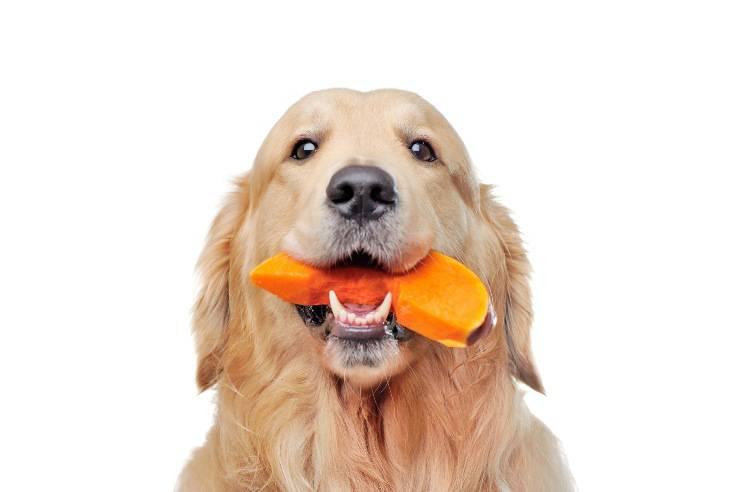 cane mangia zucca