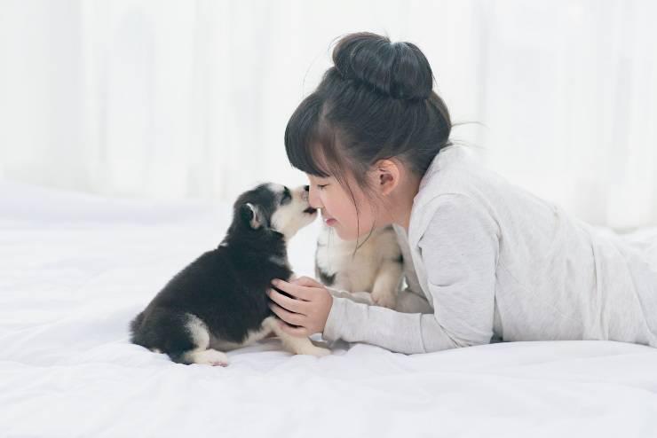 razze di cani asiatici