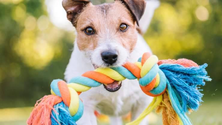 cane scuote giocattolo