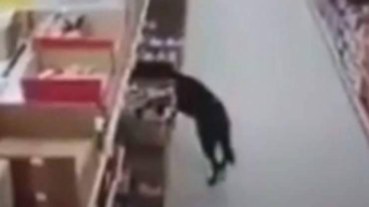 Il randagio alla ricerca di cibo (Foto video)