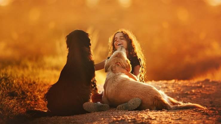 cani sono fedeli