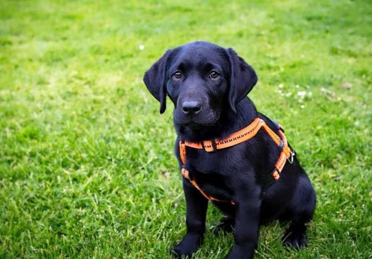 cane triste adottato tre anni