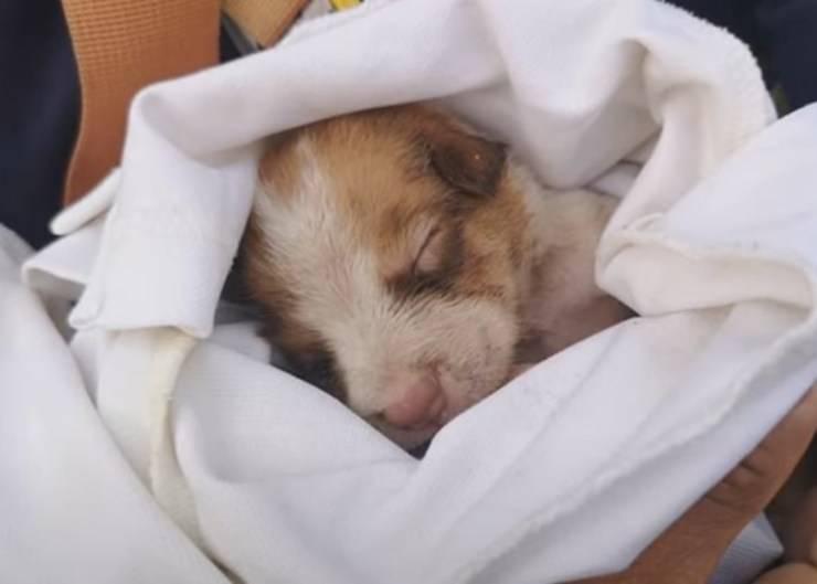 cane quattro settimane abbandonato cassonetto
