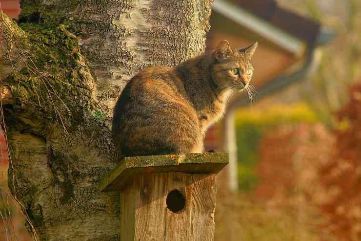 Gatto che aspetta qualcuno (Foto pixabay)