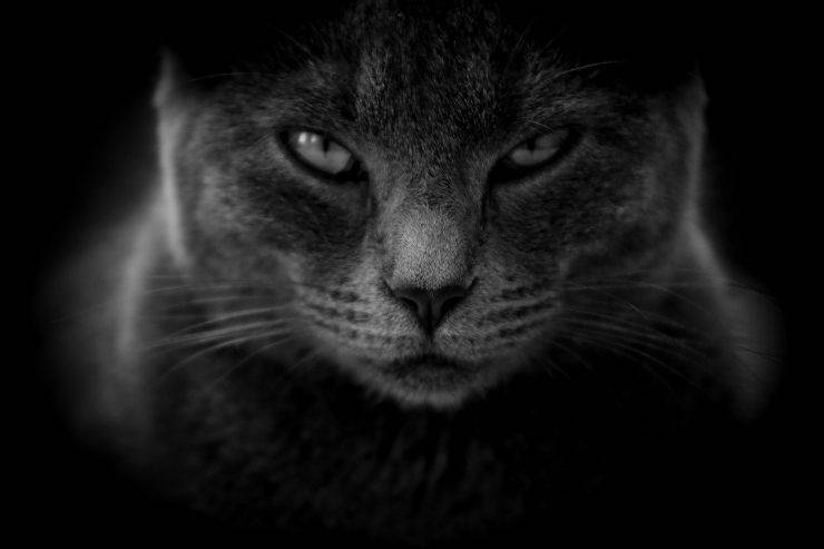 gatto camera bimbo notte