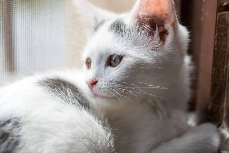 Gatto docile