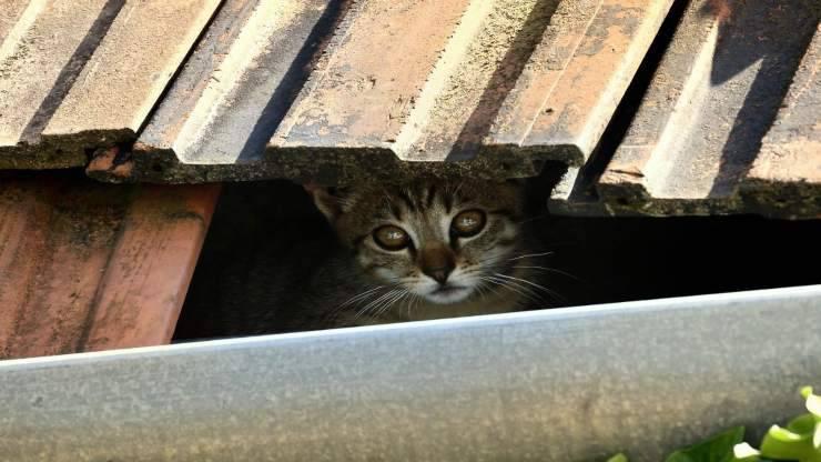 Gattino incastrato nel solaio