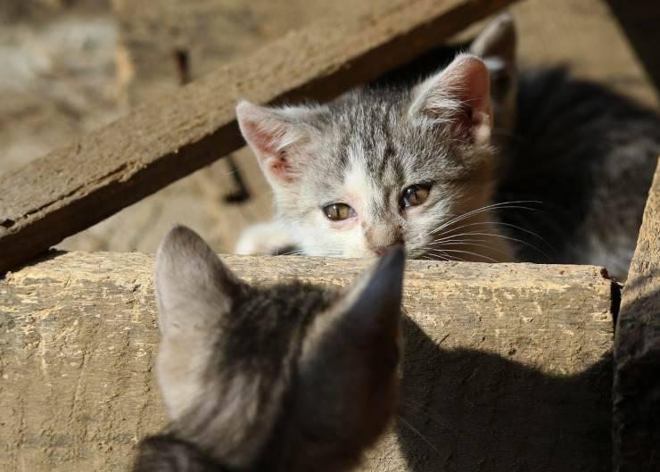 Gatti che si guardano