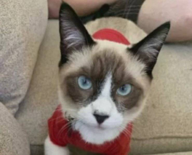 gatto rapito tre mesi vicini di casa