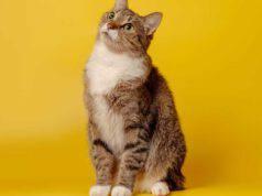 come insegnare al gatto a stare seduto