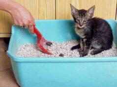 criptosporidiosi nel gatto