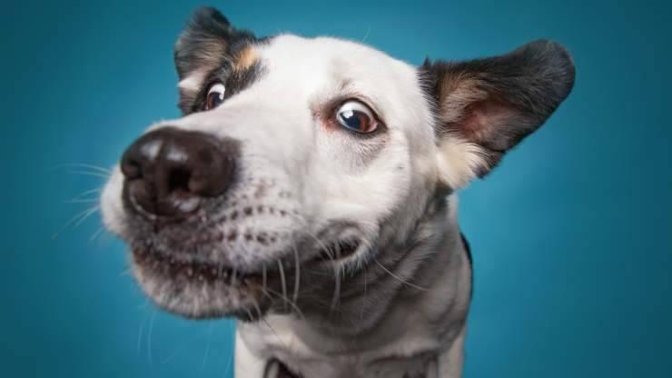 curiosità sul naso del cane
