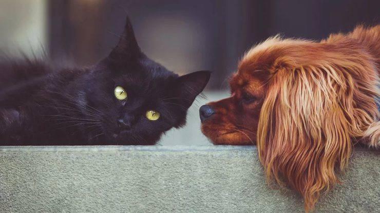 cane gatto