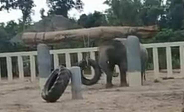 L'elefante che gioca con le ruote (Foto video)