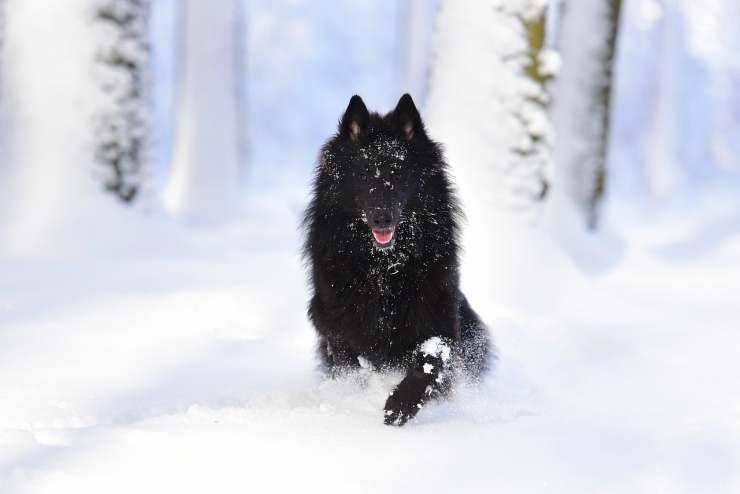 Cane che salta sula neve (Foto Pixabay)