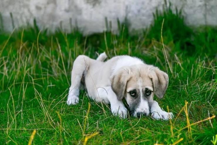 adottare cane randagio quanto vive