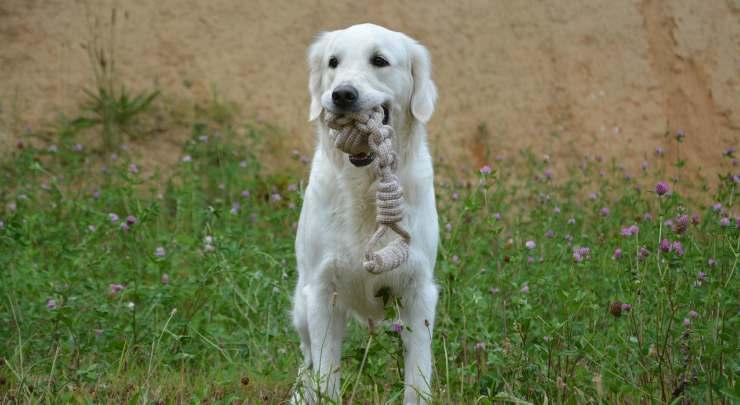 Il cane che gioca (Foto pixabay)
