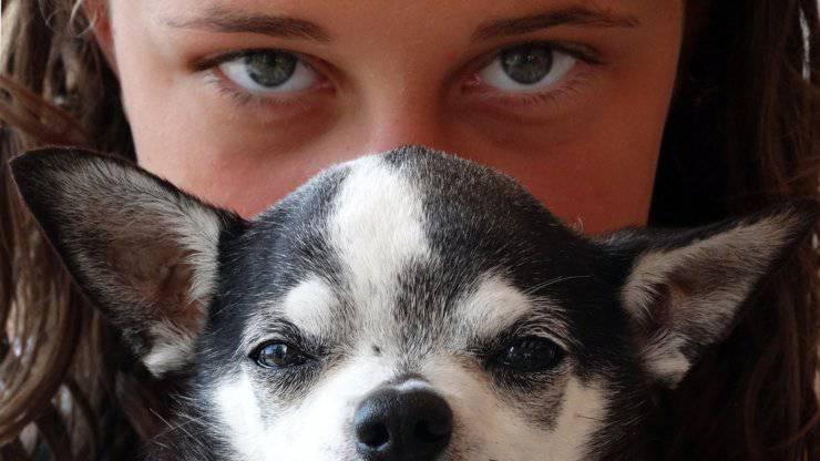 occhi cane vista vedere umani confronto persone
