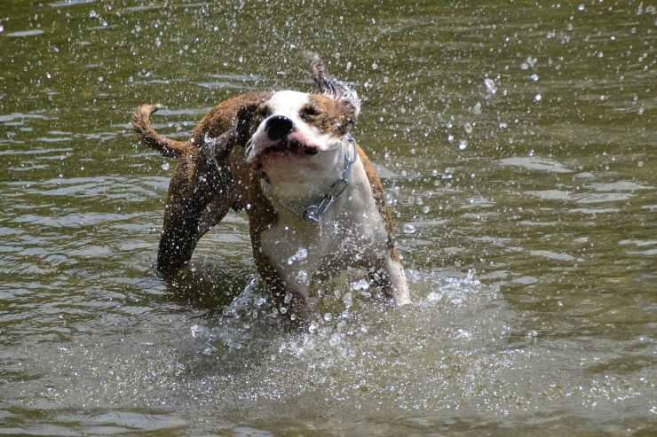 Fido si agita in acqua