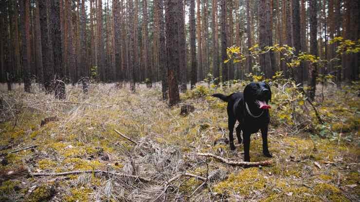 cane legato albero catena