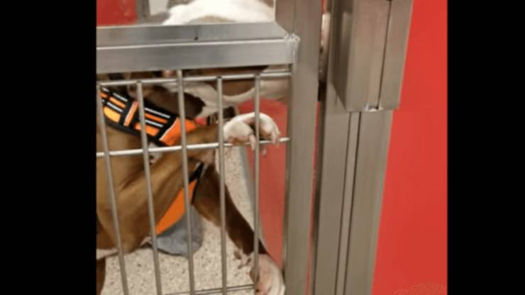 cane lecca muro box canile