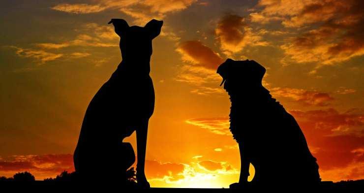 Cani che guardano il tramonto (Foto pixabay)