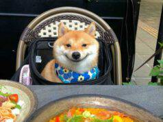 Il cane felice (Foto Instagram)