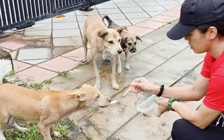 famiglia cani salvata donna