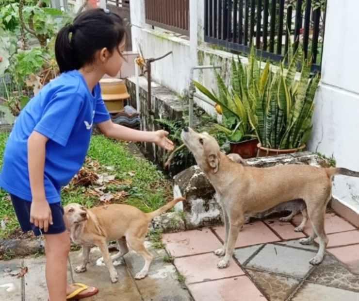 cani famiglia salvati ragazza