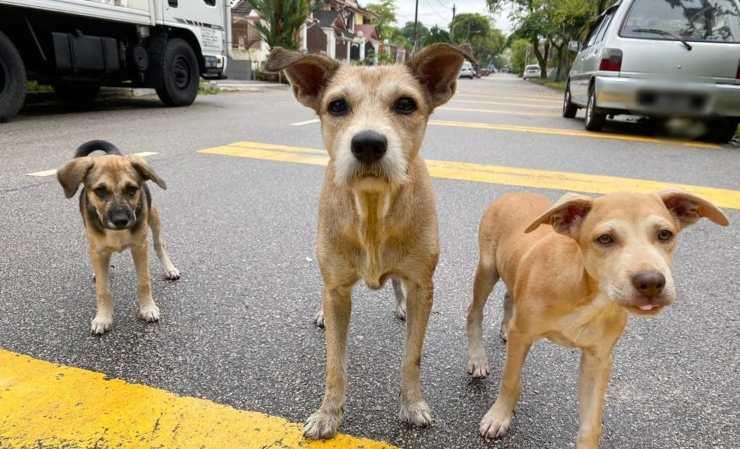 donna salva famiglia cani