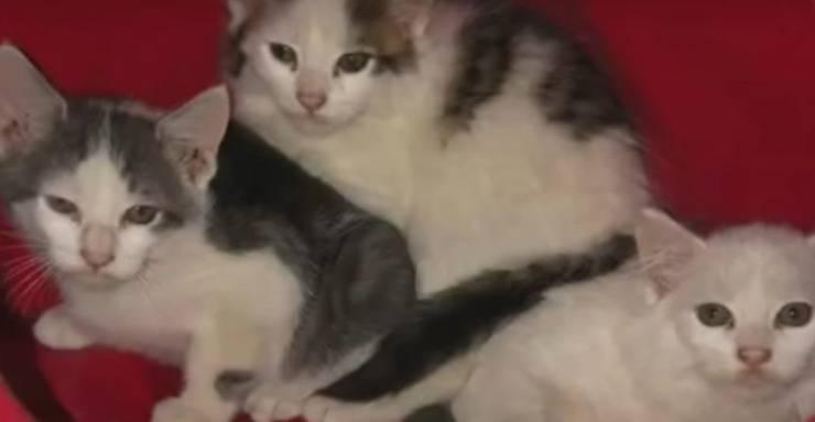 gattini randagi fogna aiuto