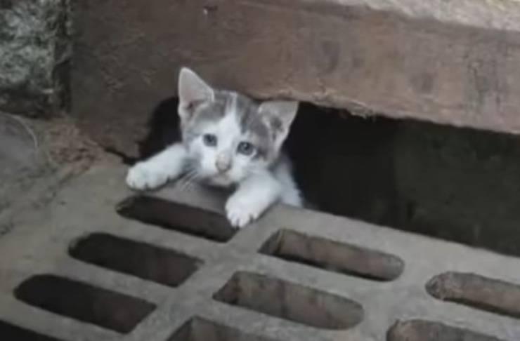 gattini fogna aiuto