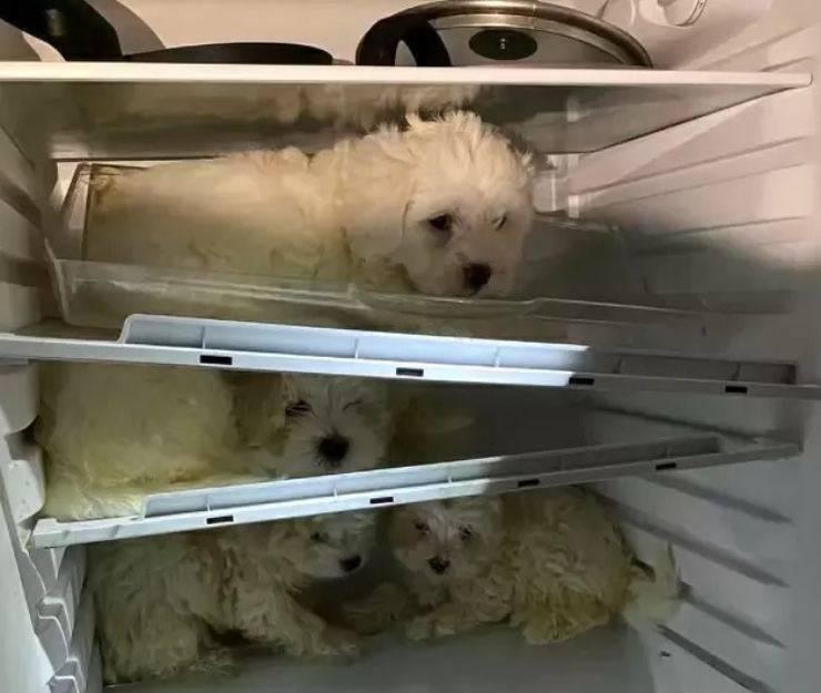 quattro cani frigorifero