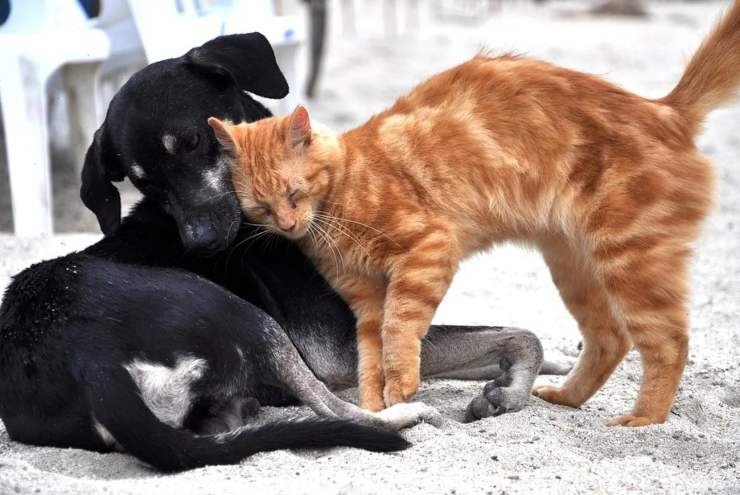 gattino consola cagnolina malata