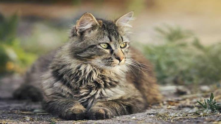 gatti roditori
