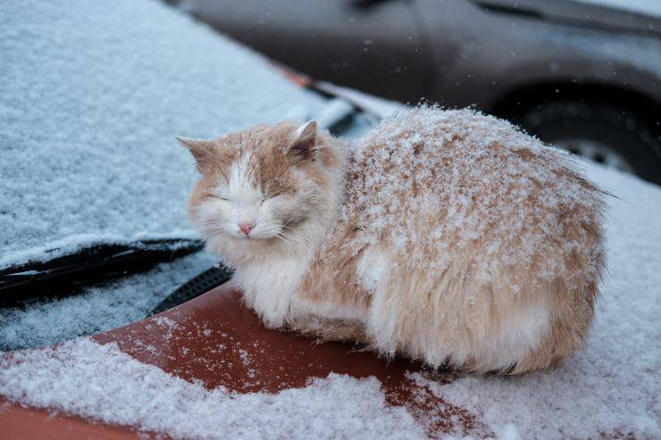 gatto fuori al freddo