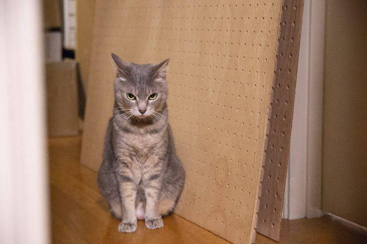 le cose che fanno innervosire il gatto