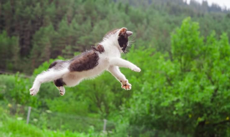 gatto cade su zampe