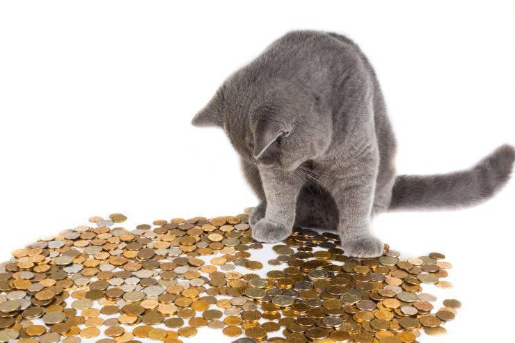 gatto e monete