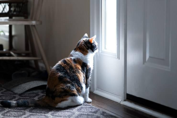 gatto dietro porta chiusa