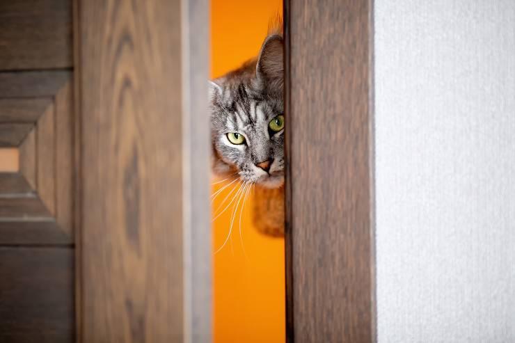 gatto che vuole entrare