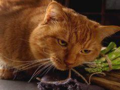 Il gatto può mangiare asparagi?