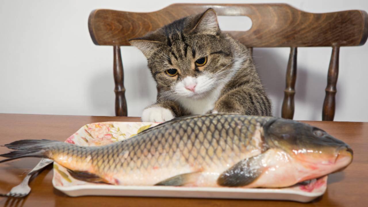 Il gatto può mangiare la pelle del pesce? Vantaggi e svantaggi