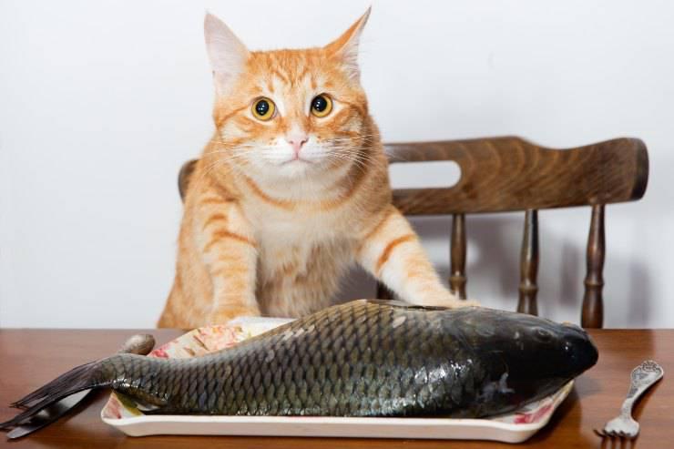 il gatto può mangiare la pelle del pesce
