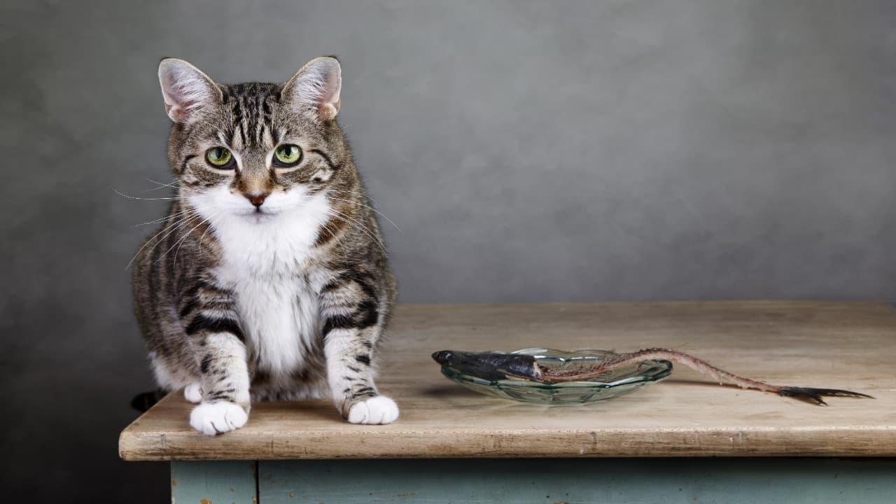 Senso di colpa nel gatto