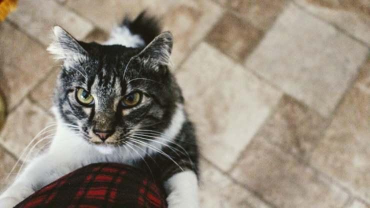 gatto sulla gamba